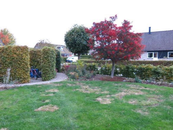 9 okt 2013 gräsmatta rosenrabatt framsida