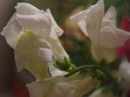 höstbukett zinnia lejongap dahlia 5