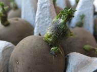 1 maj 14 potatis