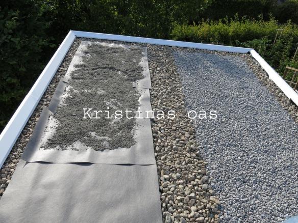 green roof grönt tak 14 kopiera