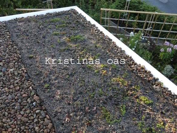 green roof grönt tak 17 kopiera