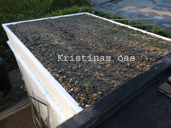 green roof grönt tak 18 kopiera