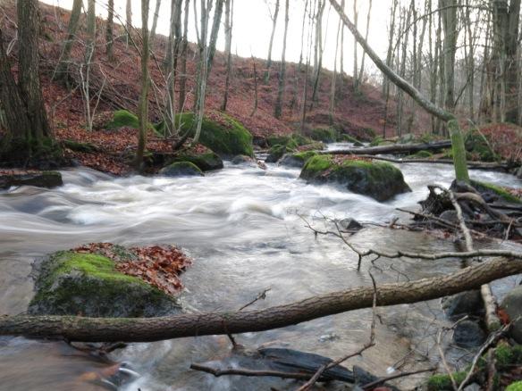 25 nov 14 promenad vatten bokskog 2