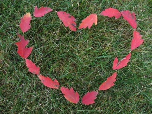 3 nov 14 löv kärlek hjärta kopparlönn