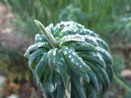 26 dec 14 daggtörel frost