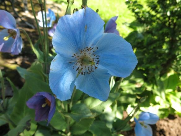 14 juni sta riksmöte 2014 trädgård nr 1 14