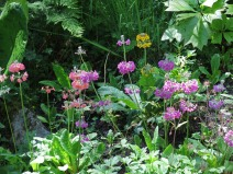 14 juni sta riksmöte 2014 trädgård nr 3 24