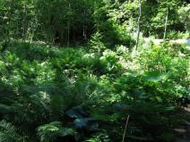 14 juni sta riksmöte 2014 trädgård nr 3 26