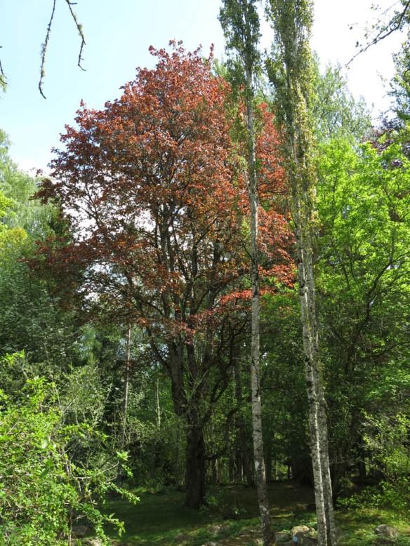 Alphems arboretum 17
