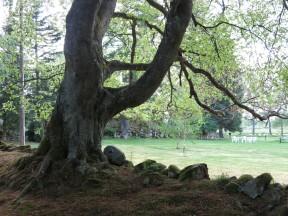 Alphems arboretum 18