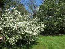 Alphems arboretum 22
