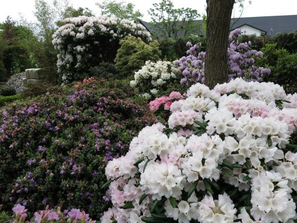 Trädgård 14 maj 2