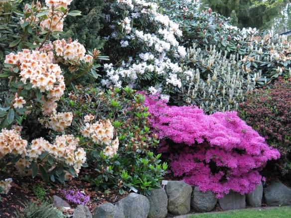 Trädgård 14 maj 4