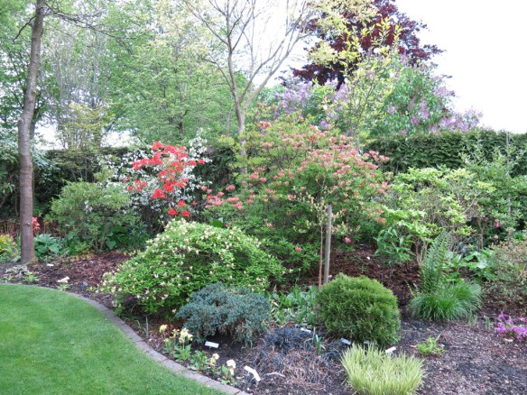 Trädgård 14 maj 6