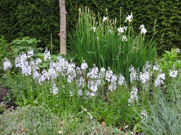 Trädgård 14 maj 7
