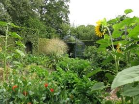 2 aug 14 Helbo köksträdgård potager 2
