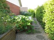 27 juli 14 trädgårdsland grönsaker