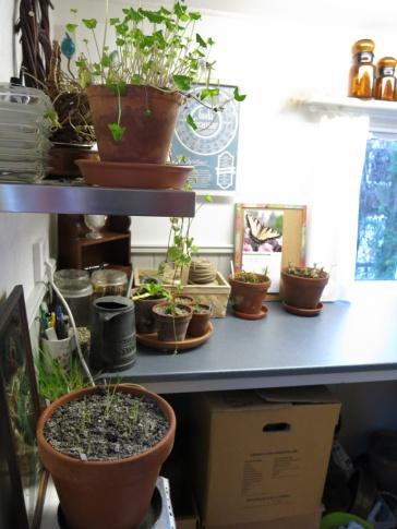5 feb 15 trädgårdsbod trädgårdsrum arbetsbänk
