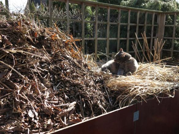 12 mars 15 vårtecken kompost katt sol