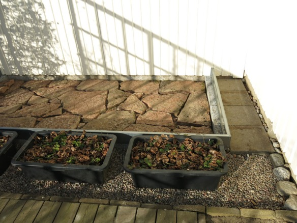 8 mars 15 växthus stenläggning 2