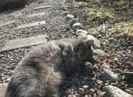 8 mars 15 vårtecken katt