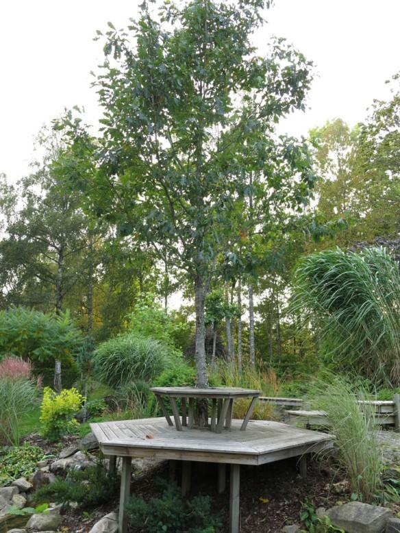 sep 2014 trädgård z10