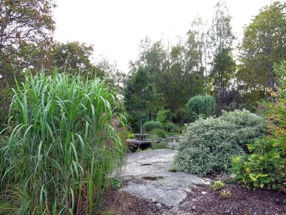 sep 2014 trädgård z11