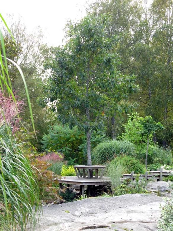 sep 2014 trädgård z6