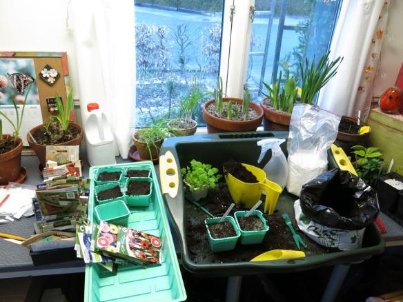 trädgårdsrum trädgårdsbod frösådd mars 15