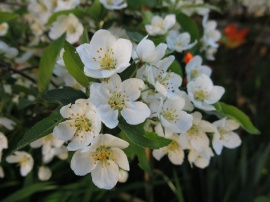 23 maj 15 trädhörn prydnadsapel eskilstuna