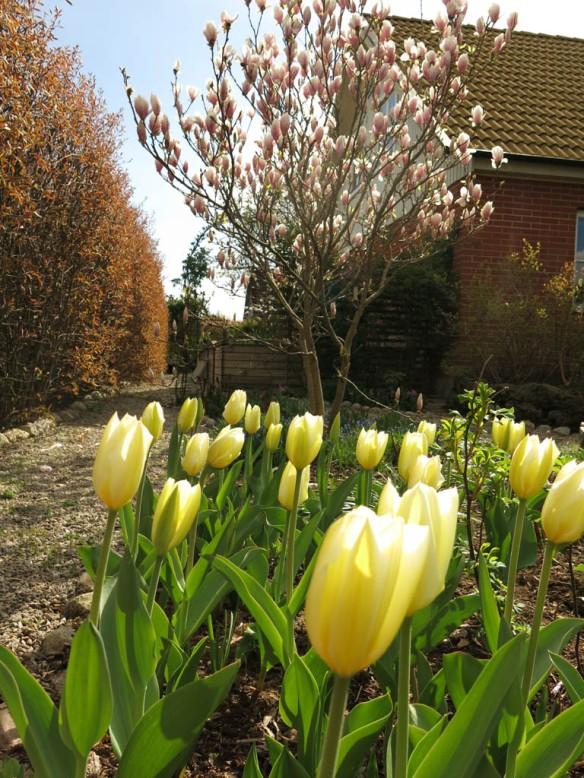 29 april tulpan pionrabatt