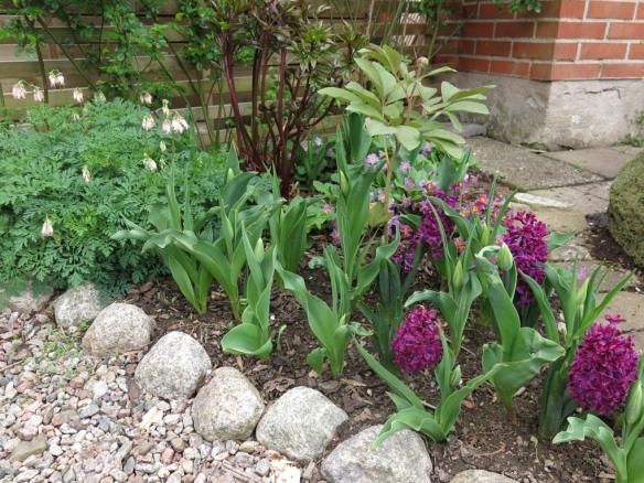 8 maj 15 hyacinter vid torvrabatten