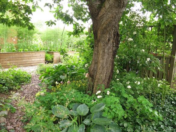 12 juli 15 hunungsros lundområdet bigarråträd 2