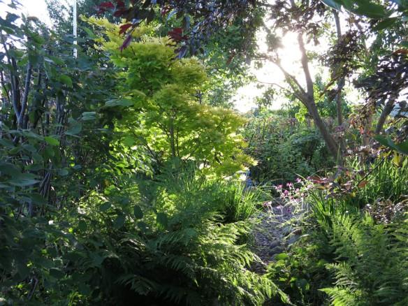 28 juni 15 gyllenlönn trädhörnet sol