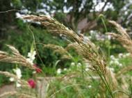15 aug 15 solrabatten gräs