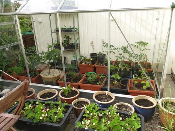 1 juni 15 växthus