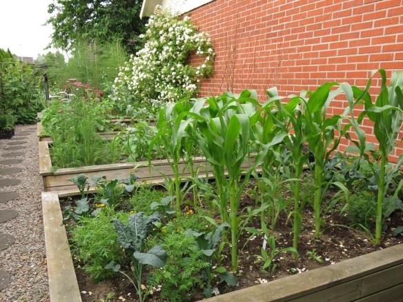 12 juli 15 trädgårdslandet grönsaker