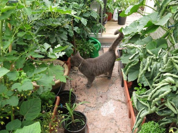12 juli växthus katt