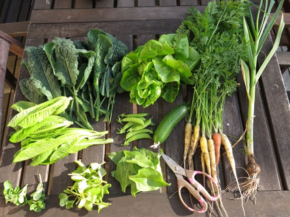 15 juli 15 grönsaker skörd