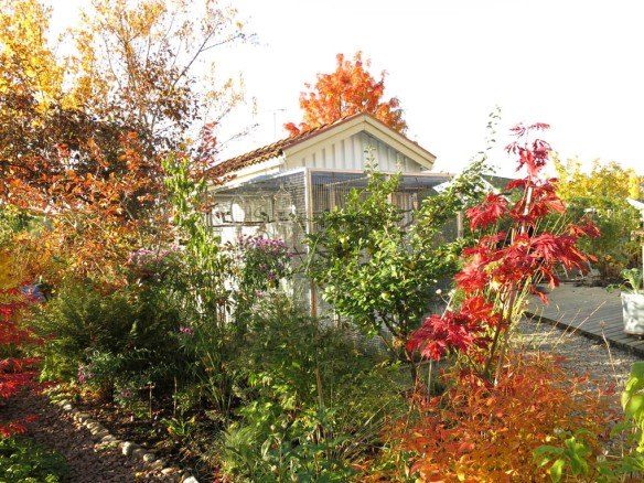 18 okt 15 trädhörnet solfjäderlönn fågelhuset