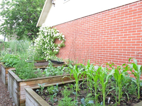 4 juli 15 trädgårdsland majs svartkål tagates