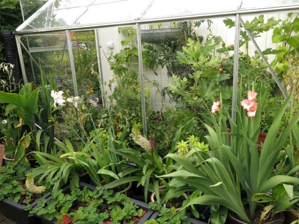 8 sep 15 växthus