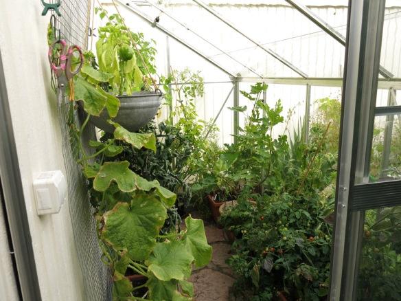 sep 15 växthus