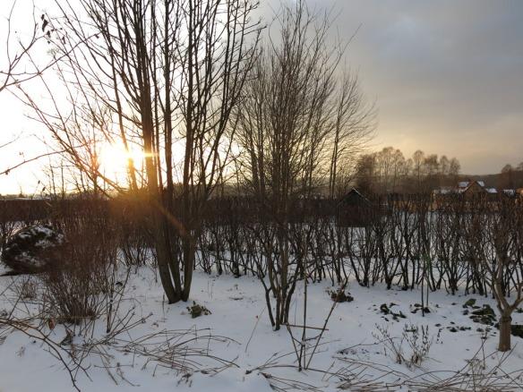 13 feb 16 trädhörnet dodong snö