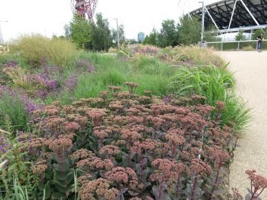 28 juli 15 Queen Elizabeth Olympic park 10