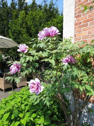 6 juni 15 ta trädgård 19
