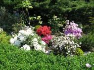 6 juni 15 ta trädgård 4