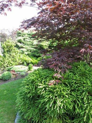 6 juni 15 ta trädgård 6