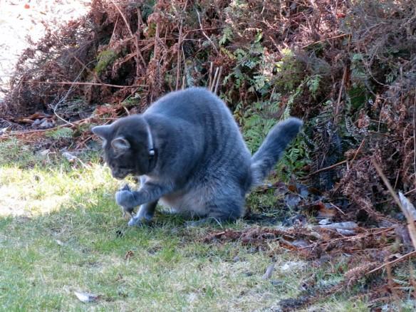 12 mars 16 katt och mus