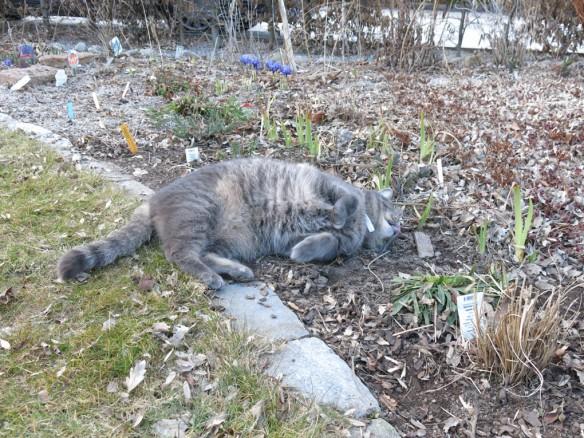 20 mars 16 katt kattmynta